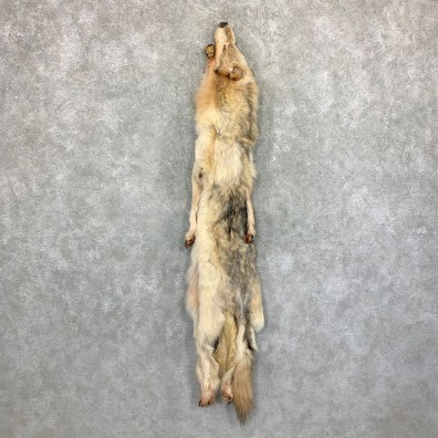 Alaskan Yukon Wolf Tanned Hide For Sale #22882 @ The Taxidermy Store