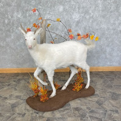 Albino Whitetail Deer Life-Size Mount For Sale #25441 - The Taxidermy Store