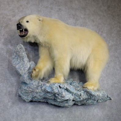 Polar Bear Life-Size Taxidermy Mount #23477 For Sale @ The Taxidermy Store