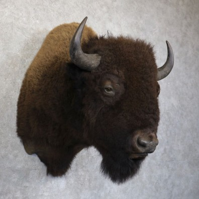 American Bison Shoulder Mount For Sale #22742 @ The Taxidermy Store
