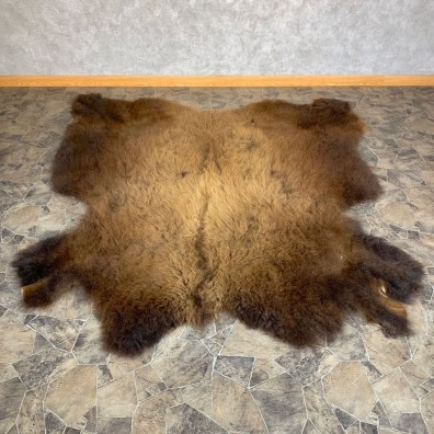 American Buffalo Bison Taxidermy Hide For Sale #23316 - The Taxidermy Store