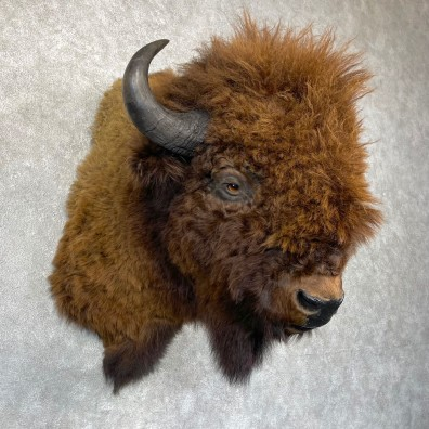 American Buffalo Shoulder Taxidermy Mount For Sale #24440 @ The Taxidermy Store