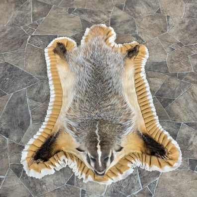 Badger Full-Size Rug Mount For Sale #23333 @ The Taxidermy Store
