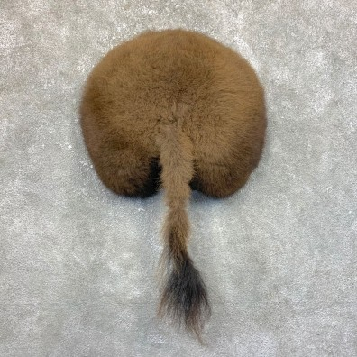 Bison Rump Mount For Sale #23937 @ The Taxidermy Store