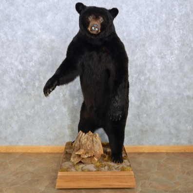 Standing Black Bear Mount For Sale #15116 @ The Taxidermy Store