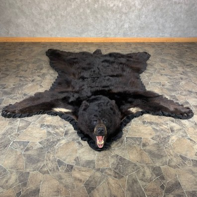 Black Bear Full-Size Rug For Sale #24018 @ The Taxidermy Store