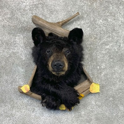Black Bear Shoulder Mount For Sale #22571 @ The Taxidermy Store