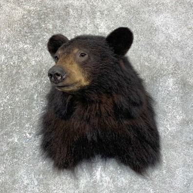 Black Bear Shoulder Mount For Sale #23875 @ The Taxidermy Store