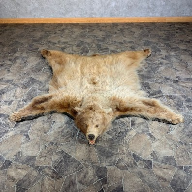 Blonde Black Bear Full-Size Rug For Sale #24013 @ The Taxidermy Store