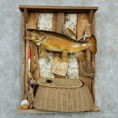 Captain's Classic Brown Trout Display Taxidermy Mount #13299 For Sale @ The Taxidermy Store