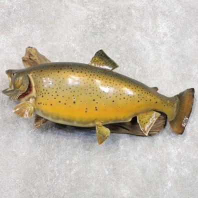 Brown Trout Fish Mount For Sale #22285 @ The Taxidermy Store