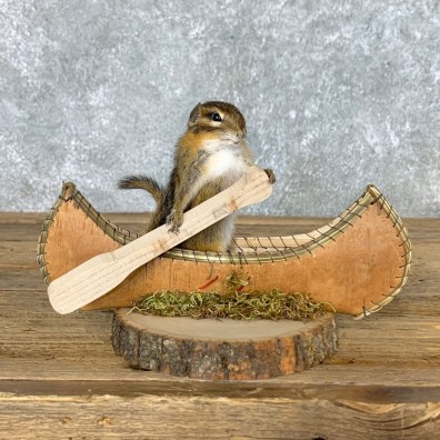 Canoe Chipmunk Novelty Mount For Sale #22609 @ The Taxidermy Store