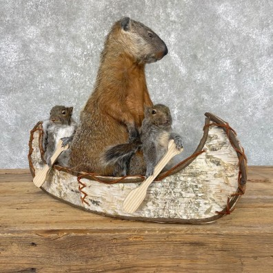 Canoeing Squirrel and Marmot Novelty Mount For Sale #24442 @ The Taxidermy Store
