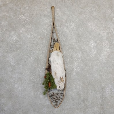 Captain's Classic Snowshoe Hare Display Taxidermy Mount #19816 For Sale @ The Taxidermy Store
