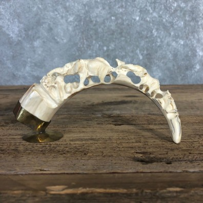 Carved Warthog Tooth For Sale #19967 @ The Taxidermy Store
