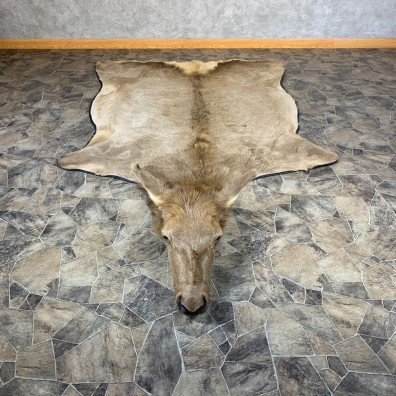 Cow Elk Taxidermy Rug For Sale #21855 @ The Taxidermy Store