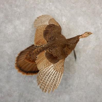 Eastern Turkey Bearded Hen Bird Mount For Sale #20701 @ The Taxidermy Store