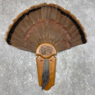 Eastern Wild Turkey Fan For Sale #25446 @ The Taxidermy Store