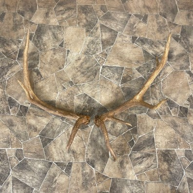 Elk Antler Craft Pack For Sale #25092 @ The Taxidermy Store