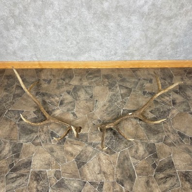 Elk Antler Craft Pack For Sale #25098 @ The Taxidermy Store