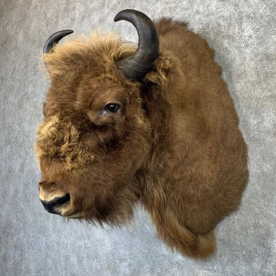 European Bison/Wisent Shoulder Mount For Sale #21186 @ The Taxidermy Store