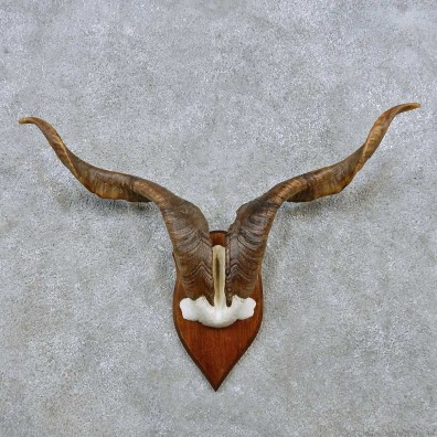 Feral Sheep Horn Plaque Mount For Sale #14524 @ The Taxidermy Store