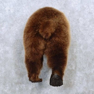 Grizzly Bear Rear Mount For Sale #15239 @ The Taxidermy Store