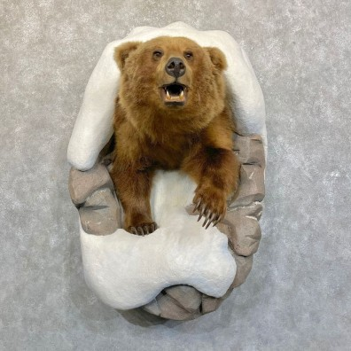 Grizzly Bear Half Life-Size Mount For Sale #24230 @ The Taxidermy Store