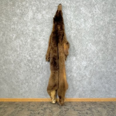 Grizzly Bear Tanned Hide For Sale #25344 @ The Taxidermy Store