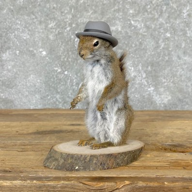 Hipster Squirrel Novelty Mount For Sale #24579 @ The Taxidermy Store
