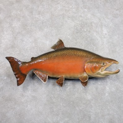 King Salmon Fish Mount For Sale #22283 @ The Taxidermy Store