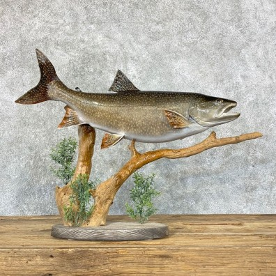 Lake Trout Freshwater Fish Mount For Sale #22324 @ The Taxidermy Store