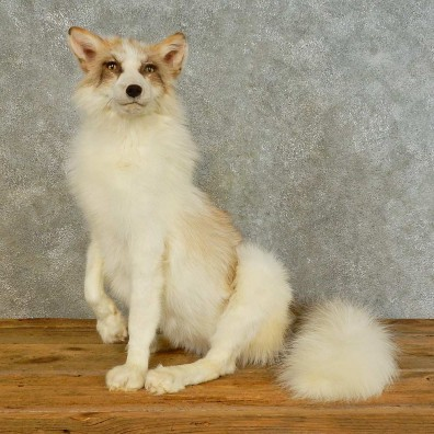 Red Marble Fox Life-Size Mount For Sale #16494 @ The Taxidermy Store