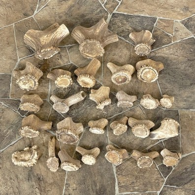 Mixed Antler Burr Craft Pack For Sale #25111 @ The Taxidermy Store
