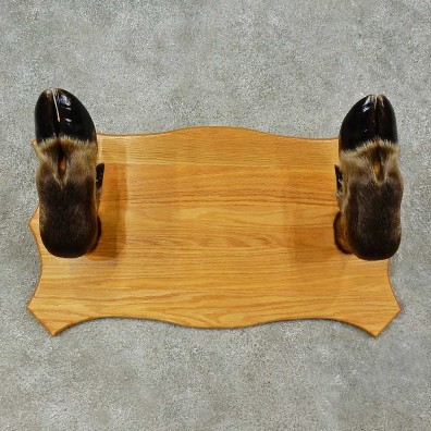 Moose Leg Gun Rack For Sale #16258 @ The Taxidermy Store