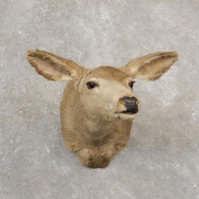 Mule Deer Doe Shoulder Mount For Sale #20523 @ The Taxidermy Store
