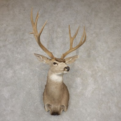 Mule Deer Shoulder Mount For Sale #20522 @ The Taxidermy Store