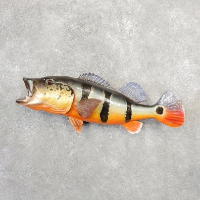 Peacock Bass Fish Mount For Sale #21093 @ The Taxidermy Store