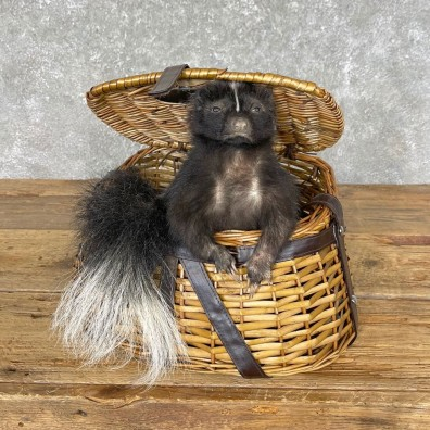 Picnic Basket Skunk Novelty Mount For Sale #24578 @ The Taxidermy Store