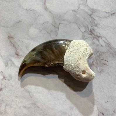 Polar Bear Claw Taxidermy For Sale #20641 - The Taxidermy Store