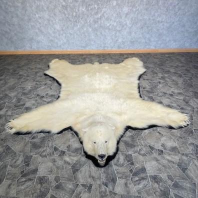Polar Bear Taxidermy Rug #25262 For Sale @ The Taxidermy Store
