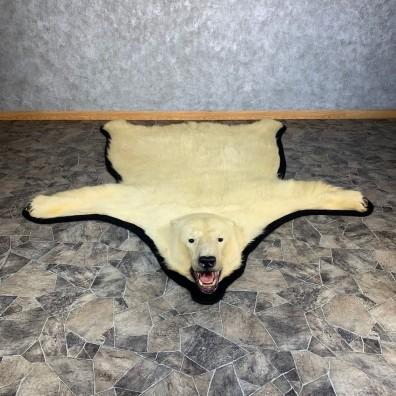 Polar Bear Taxidermy Rug #21235 For Sale @ The Taxidermy Store