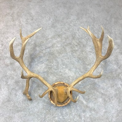 Red Deer Stag Plaque Mount For Sale #23710 @ The Taxidermy Store