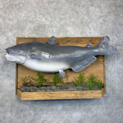 Reproduction Blue Catfish Fish Mount #24025 - The Taxidermy Store