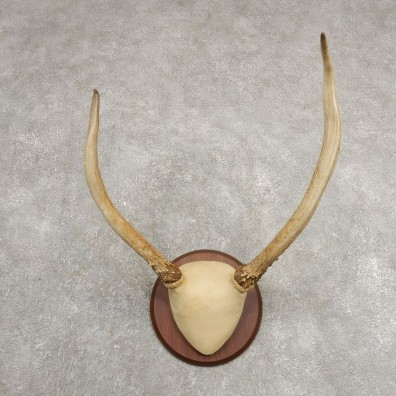 Rocky Mountain Elk Plaque Mount For Sale #20998 @ The Taxidermy Store