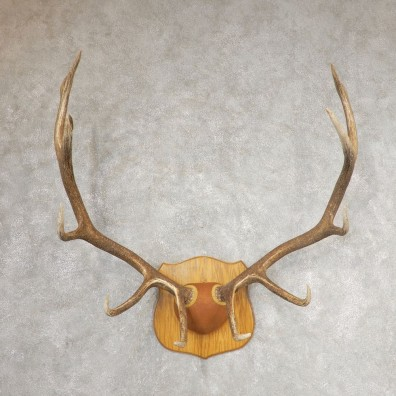 Rocky Mountain Elk Plaque Mount For Sale #21065 @ The Taxidermy Store