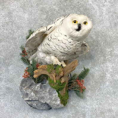 Snowy Owl Reproduction Bird Mount For Sale #22316 @ The Taxidermy Store