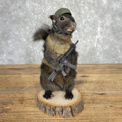 Soldier Squirrel Novelty Mount For Sale #24424 @ The Taxidermy Store