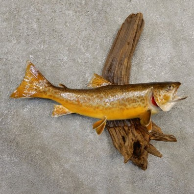 Tiger Trout Freshwater Fish Mount For Sale #20567 @ The Taxidermy Store