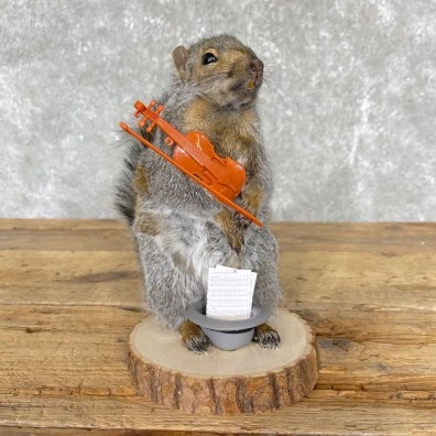 Violin Squirrel Novelty Mount For Sale #24449 @ The Taxidermy Store